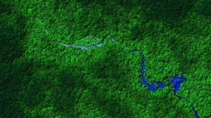 selva-honduras--644x362