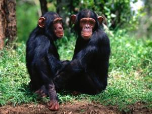 Monkeys-monkeys-14750646-1600-1200